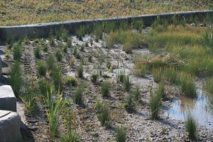 At the NREL Central Arroyo Detention Pond in Golden, CO, the Grasscrete Partially Filled System of pervious concrete is the perfect fit for the environment and this project.