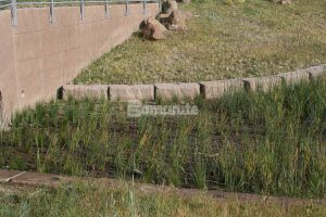 An example of a detention pond done correctly using Grasscrete Partially Filled System of pervisous concrete at NREL Central Arroyo Detention Pond in Golden, CO.